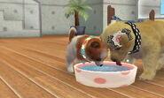 Nintendogs Cats 034