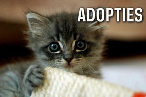 Bestand:Aanvragen adopties.jpg