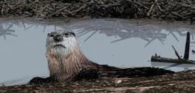 File:Brown Otter.jpg