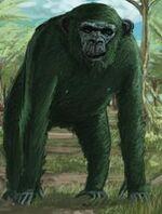 Mossy Chimp Tyrant