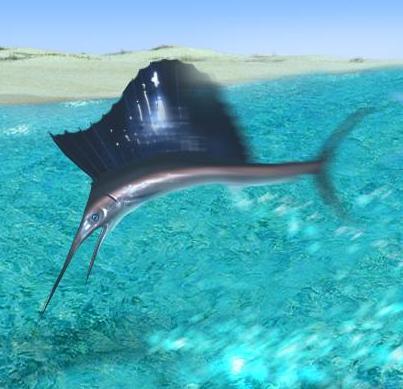 File:Blue Sailfish.jpg