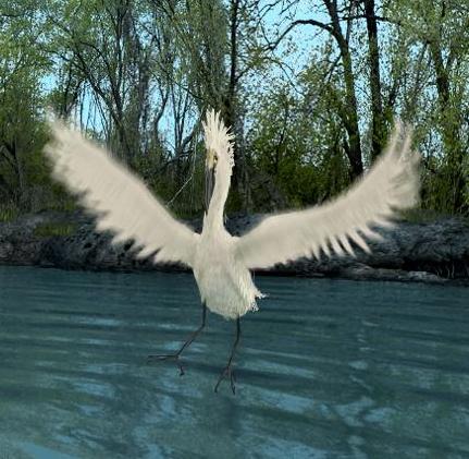 File:Great Egret.jpg