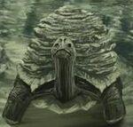 Rockshell Tortoise