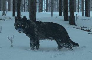 File:Black Wolf.jpg
