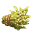 Giant Fagot