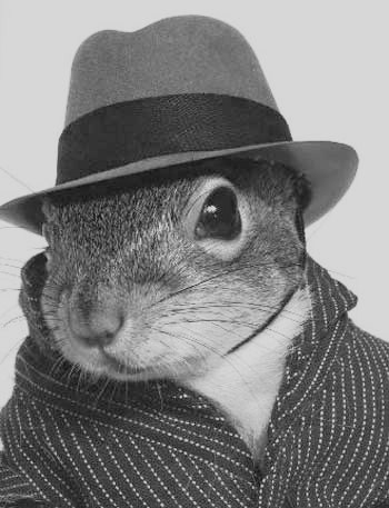 File:Squirrel4.jpg