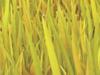 Grass 2016-08-15 14-40-57 0-35-12-47