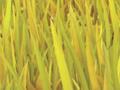 Grass 2016-08-15 14-40-57 0-35-12-47.png