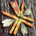 Spitfire Beetle