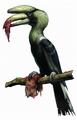 Zombie Hornbill (Great Hornbill)