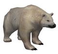 Polar Bear (Guild Wars)