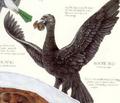 Bootie Bird
