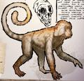 Mesopithecus amicufur