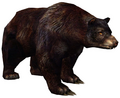 Black Bear (Guild Wars)