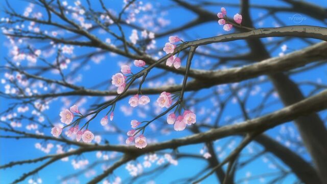 File:Cherry Blossoms.jpg
