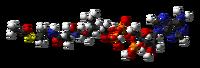 Acetyl-CoA-3D-balls