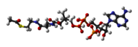 Acetyl-CoA-3D-balls.png