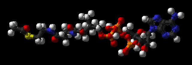 Slika:Acetyl-CoA-3D-balls.png