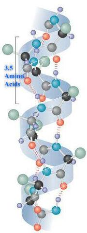 AlphaHelixProtein