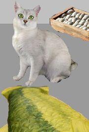 The Lost Cat 1