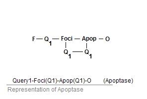 File:Apoptase.jpg