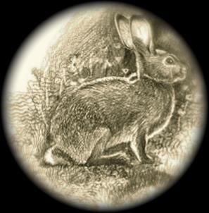 File:Laughlin Rabbit.jpg