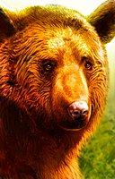 Animal bear brown
