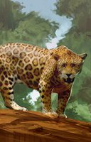 Animal cat jaguar