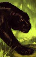 Animal panther