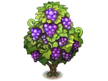 File:Red grape vine.png
