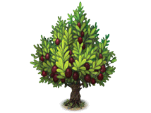 File:Olive tree.png