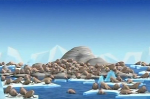 The Walrus Colony