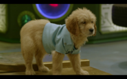 And Then They Were Puppies-Puppy Dr. O