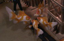 Flying goldfish2