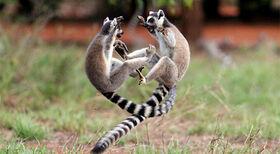 Animals-fighting-2