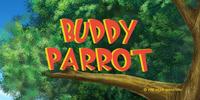 Buddy Parrot