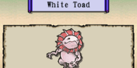 White Toad