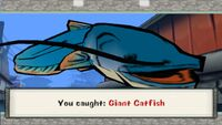 Giant Catfish
