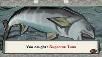 Supreme Tuna