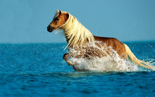 File:Horse-in-the-sea.jpg