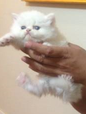 File:Kitty2.png