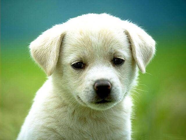 File:Cute-Dog.jpg
