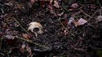 221Skull.png