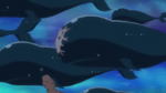 Island Whales.png