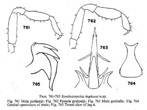 Synthetonychia hughsoni Forster-1954
