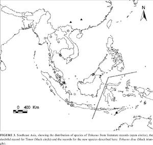 Distribution Tithaeus