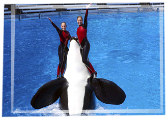 Pic-show-orca2