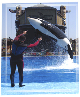 Pic-trainer-orca3