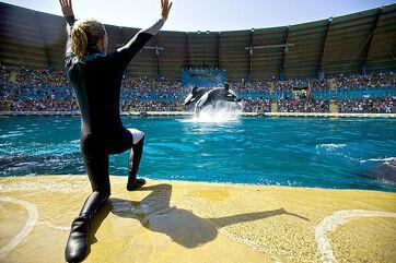2009 11 24 spect orques jour 8