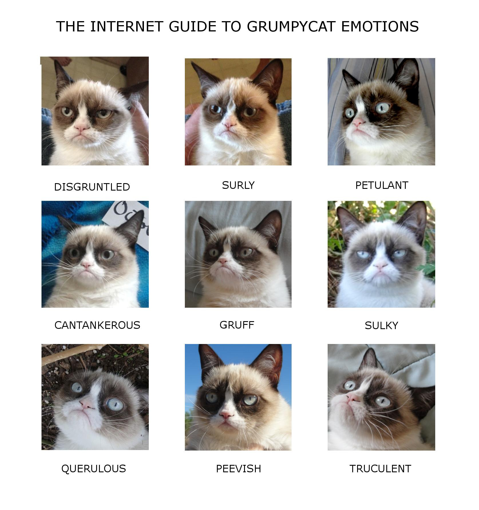 Image GrumpyCatEmotionChartjpg Original Stories Wiki - 17 cats that are angry grumpy and fed up with everything